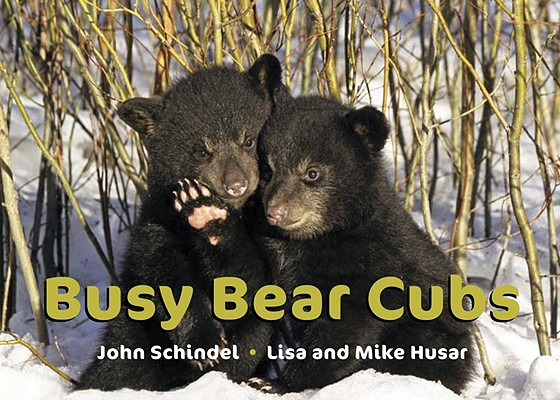 Busy Bear Cubs By Schindel, John/ Husar, Lisa (PHT)/ Husar, Mike (PHT)